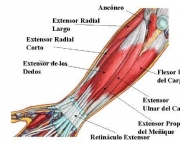 Flexor Radial do Carpo (1)