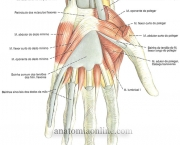 Flexor Radial do Carpo (2)