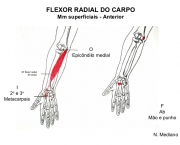 Flexor Radial do Carpo (4)
