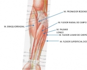 Flexor Radial do Carpo (5)