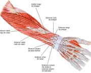 Flexor Radial do Carpo (9)